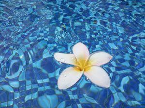 frangipani-in-water-2-1125097-m