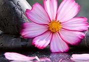pink-stones
